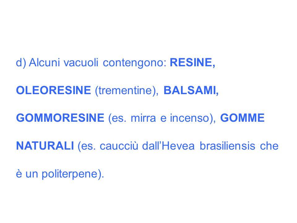 d) Alcuni vacuoli contengono: RESINE, OLEORESINE (trementine), BALSAMI, GOMMORESINE (es. mirra e incenso), GOMME NATURALI (es. caucciù dallHevea brasi