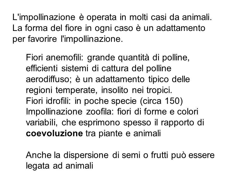 L impollinazione è operata in molti casi da animali.