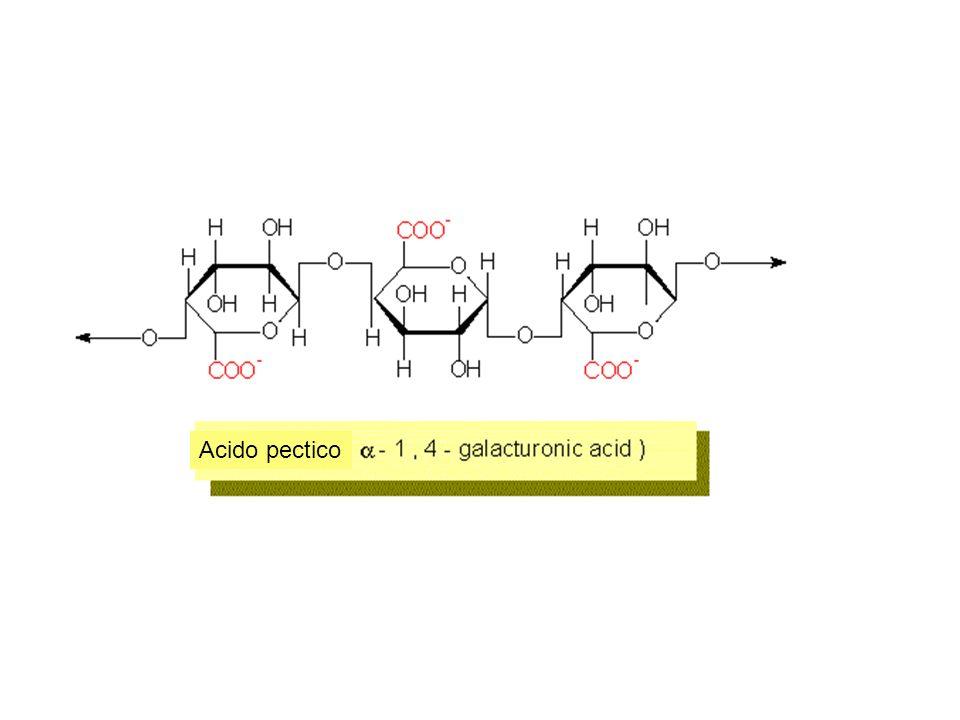 MINERALIZZAZIONE Nella parete cellulare si possono depositare sostanze minerali quali carbonato di calcio (Ca2CO3), ossalato di Ca, biossido di silicio (SiO2, silice) che la rendono assai dura e resistente.