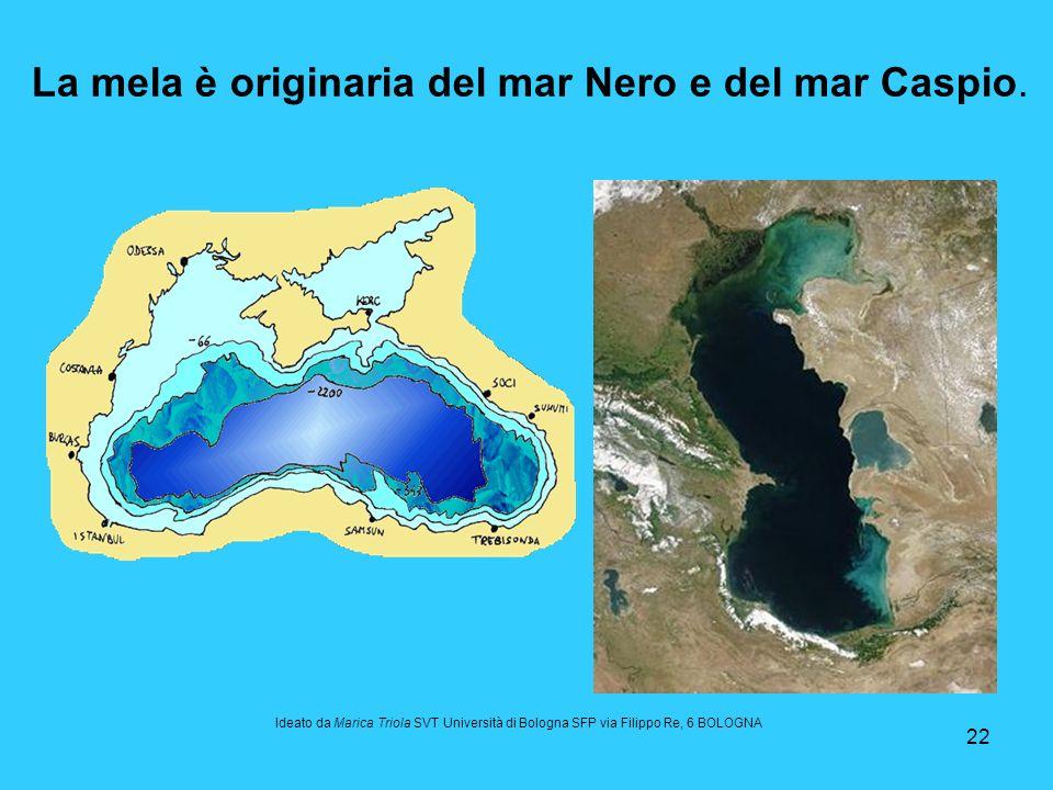 22 La mela è originaria del mar Nero e del mar Caspio. Ideato da Marica Triola SVT Università di Bologna SFP via Filippo Re, 6 BOLOGNA