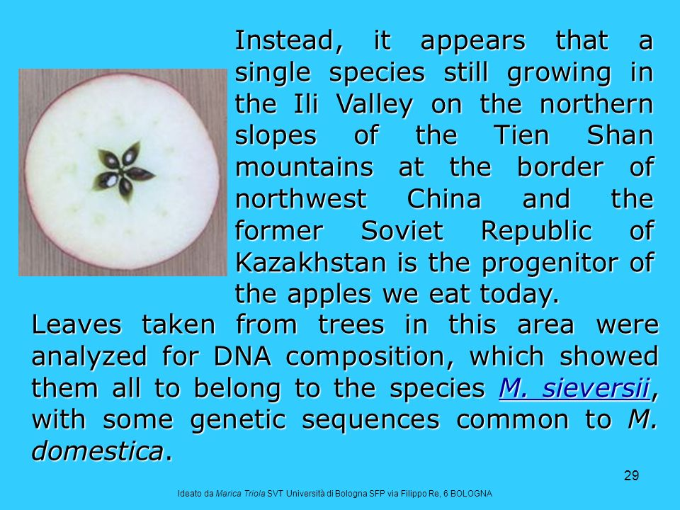 29 Leaves taken from trees in this area were analyzed for DNA composition, which showed them all to belong to the species M.