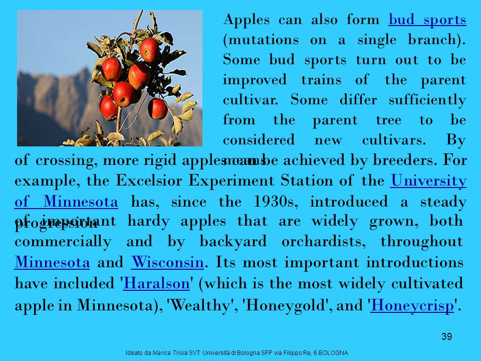 39 of important hardy apples that are widely grown, both commercially and by backyard orchardists, throughout Minnesota and Wisconsin.
