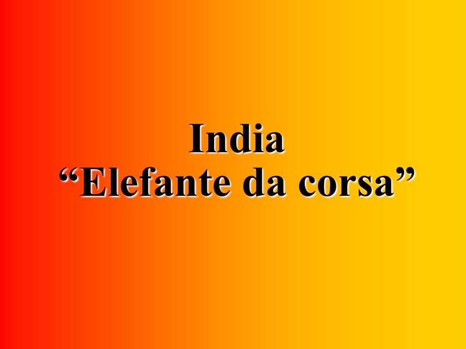 India Elefante da corsa