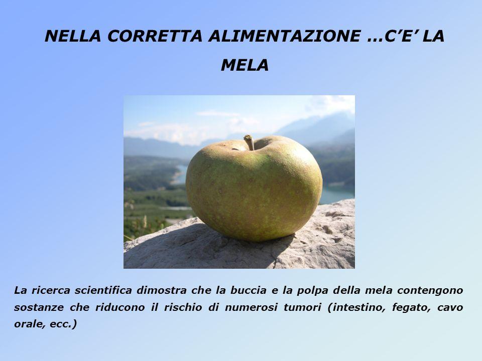NELLA CORRETTA ALIMENTAZIONE …CE LA MELA La ricerca scientifica dimostra che la buccia e la polpa della mela contengono sostanze che riducono il risch