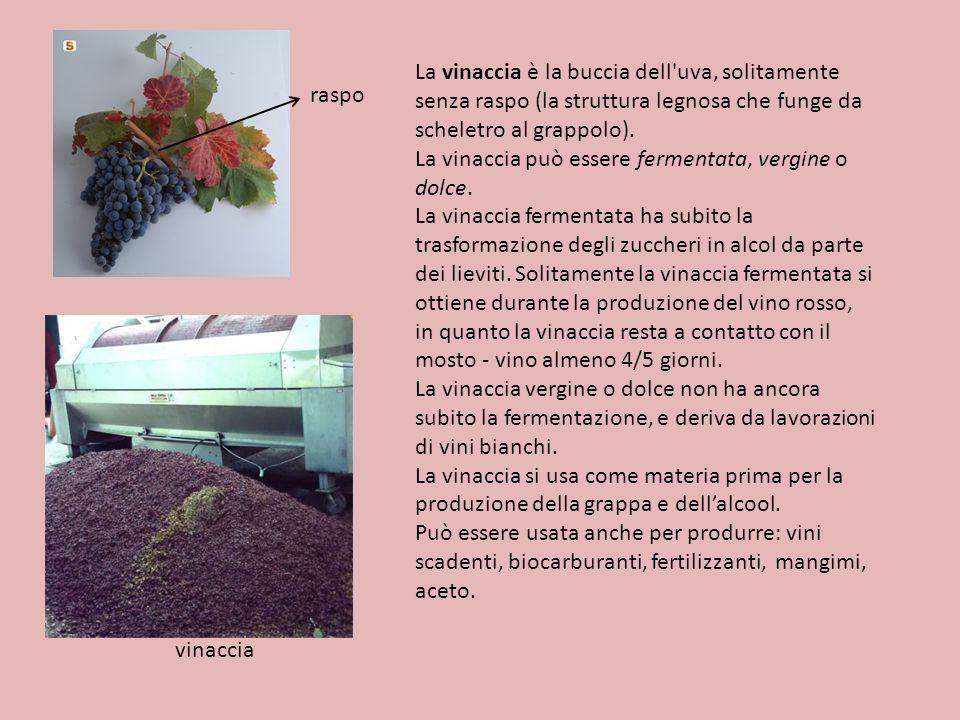 La vinaccia è la buccia dell'uva, solitamente senza raspo (la struttura legnosa che funge da scheletro al grappolo). La vinaccia può essere fermentata