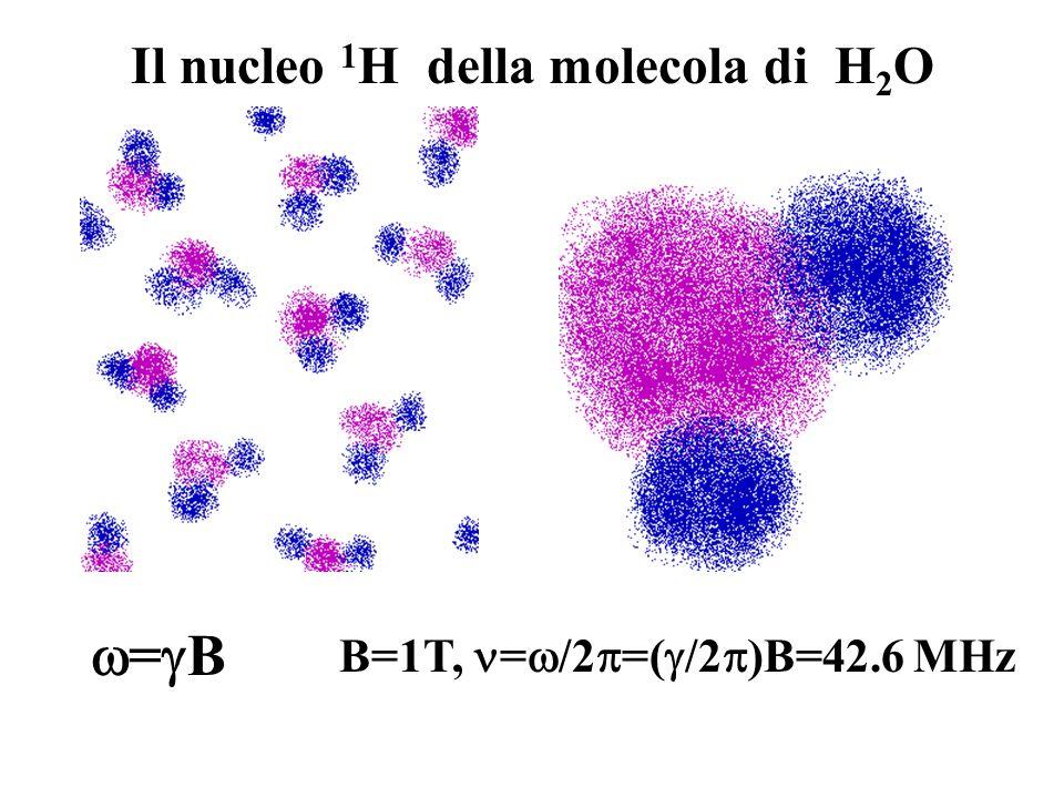 Il nucleo 1 H della molecola di H 2 O = B B=1T, = /2 =( /2 )B=42.6 MHz