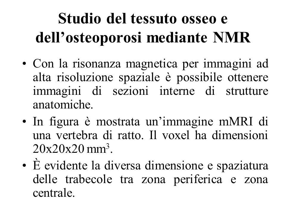 Studio del tessuto osseo e dellosteoporosi mediante NMR Con la risonanza magnetica per immagini ad alta risoluzione spaziale è possibile ottenere imma