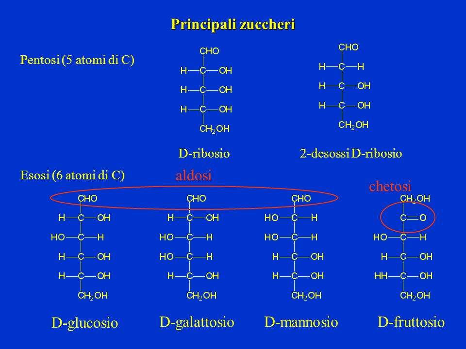 Principali zuccheri D-ribosio Pentosi (5 atomi di C) Esosi (6 atomi di C) 2-desossi D-ribosio D-glucosio D-galattosioD-mannosioD-fruttosio aldosi chet