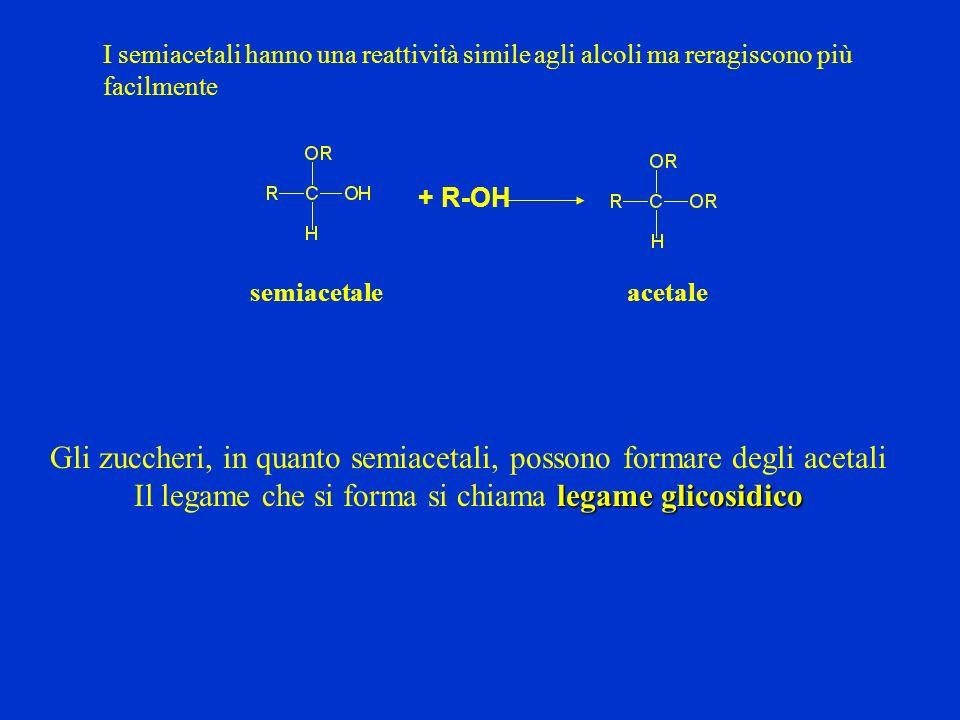 I semiacetali hanno una reattività simile agli alcoli ma reragiscono più facilmente + R-OH semiacetaleacetale Gli zuccheri, in quanto semiacetali, pos