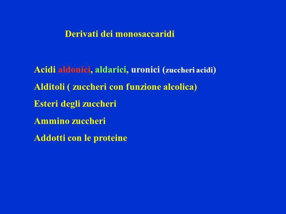 Derivati dei monosaccaridi Acidi aldonici, aldarici, uronici ( zuccheri acidi ) Alditoli ( zuccheri con funzione alcolica) Esteri degli zuccheri Ammin
