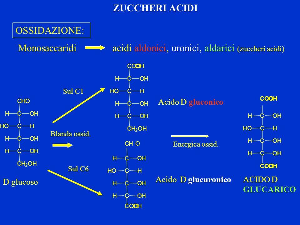 OSSIDAZIONE: Monosaccaridi acidi aldonici, uronici, aldarici (zuccheri acidi) COOOH C C C C CH 2 OH HOH HOH OHH HOH Blanda ossid. Sul C1 Sul C6 C C C