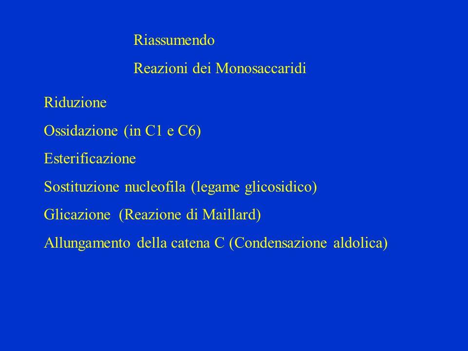 Riassumendo Reazioni dei Monosaccaridi Riduzione Ossidazione (in C1 e C6) Esterificazione Sostituzione nucleofila (legame glicosidico) Glicazione (Rea