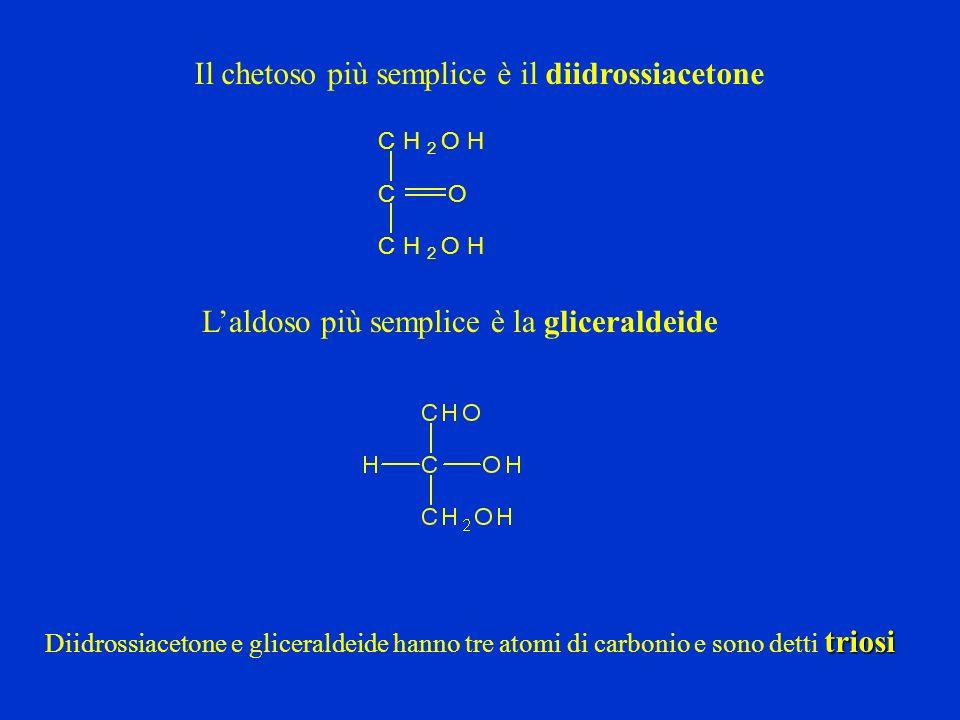 O OH OH OH CH 2 OH OH Nella rappresentazione convenzionale gli zuccheri D hanno il CH 2 OH in alto D glucosio D glucosio aperto In soluzione esiste un equilibrio tra forma, forma e forma aperta Le forme e del D glucosio in soluzione acquosa si interconvertono luna nellaltra, questo fenomeno di variazione della rotazione ottica Prende il nome di MUTAROTAZIONE anomeri Gli isomeri e si dicono anomeri