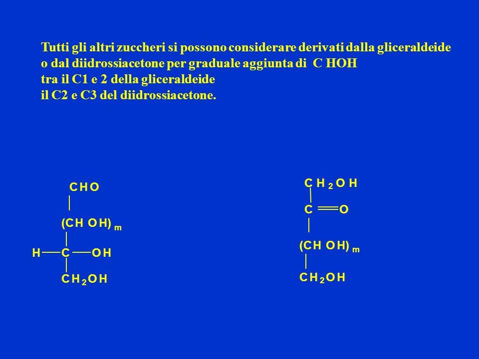 Principali zuccheri D-ribosio Pentosi (5 atomi di C) Esosi (6 atomi di C) 2-desossi D-ribosio D-glucoso D-galattosoD-mannosoD-fruttoso aldosi chetosi