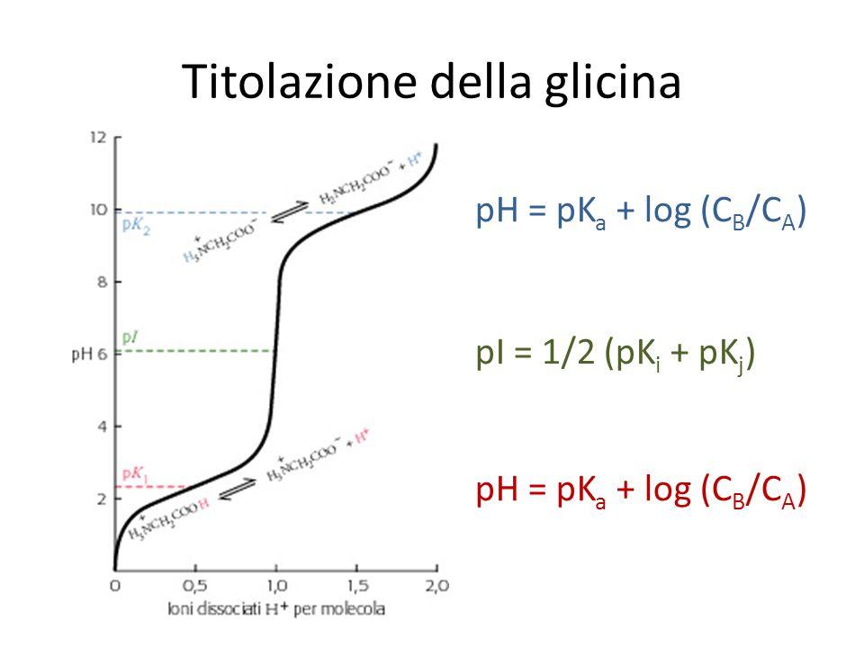 Titolazione della glicina pH = pK a + log (C B /C A ) pI = 1/2 (pK i + pK j )