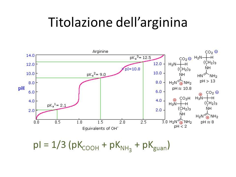Titolazione dellarginina pI = 1/3 (pK COOH + pK NH 3 + pK guan )