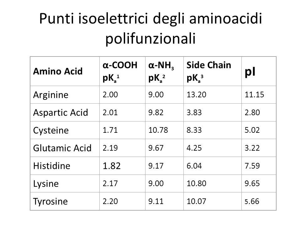 Punti isoelettrici degli aminoacidi polifunzionali Amino Acid α-COOH pK a 1 α-NH 3 pK a 2 Side Chain pK a 3 pI Arginine 2.009.0013.2011.15 Aspartic Ac
