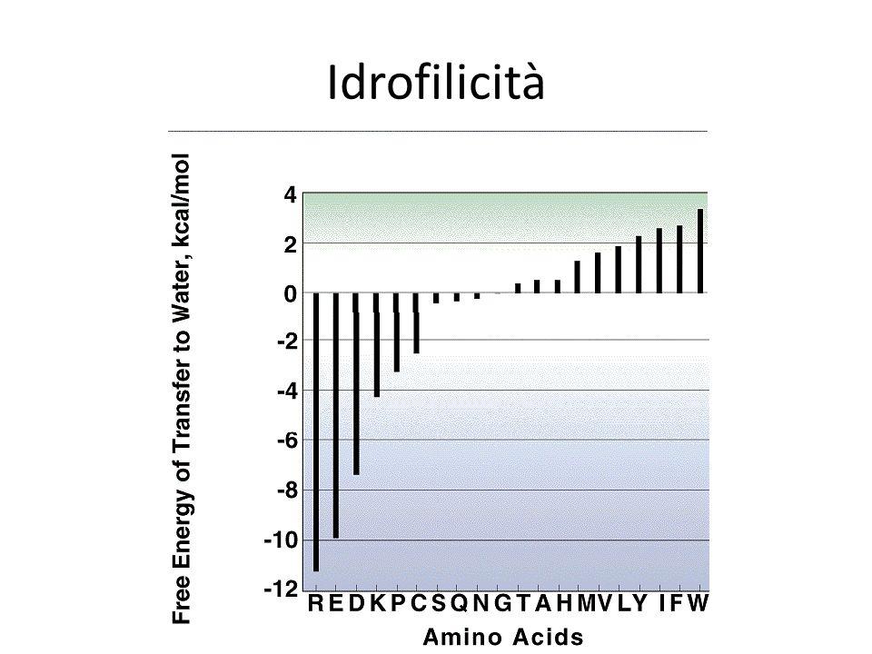 Idrofilicità