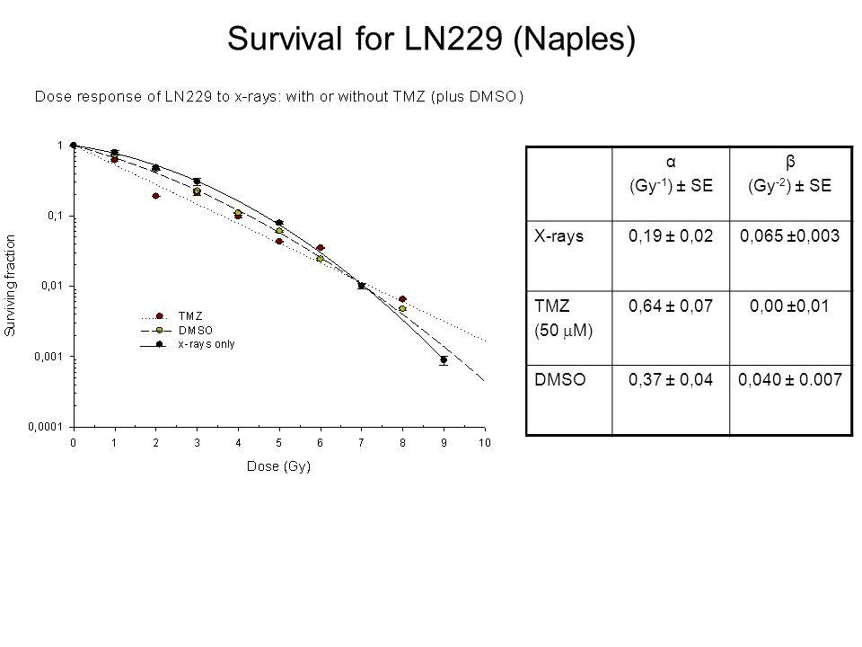 Survival for LN229 (Naples) α (Gy -1 ) ± SE β (Gy -2 ) ± SE X-rays0,19 ± 0,020,065 ±0,003 TMZ (50 M) 0,64 ± 0,070,00 ±0,01 DMSO0,37 ± 0,040,040 ± 0.00