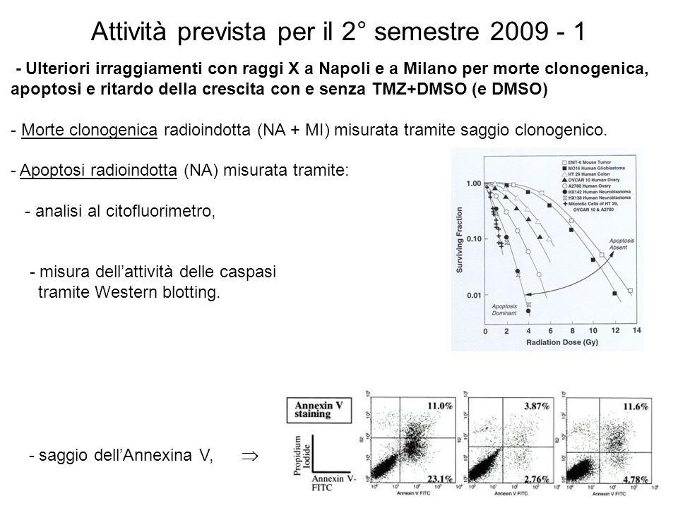 Attività prevista per il 2° semestre 2009 - 1 - Ulteriori irraggiamenti con raggi X a Napoli e a Milano per morte clonogenica, apoptosi e ritardo dell