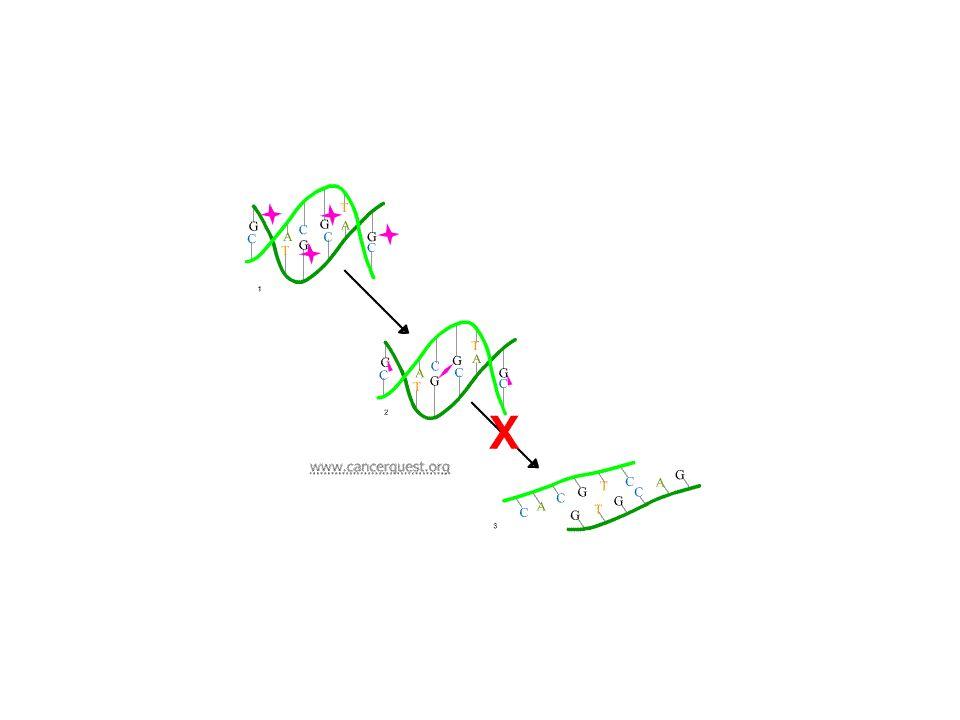 Attività previste nel secondo semestre 2009 Ulteriori curve clonogeniche per raggi X con e senza TMZ+DMSO (e DMSO) Esposizione a fasci di particelle ( 12 C) ai LNL Risposta a raggi X con e senza TMZ+DMSO (e DMSO) –Vitalità (apoptosi e MTT assay) –Analisi del ciclo cellulare