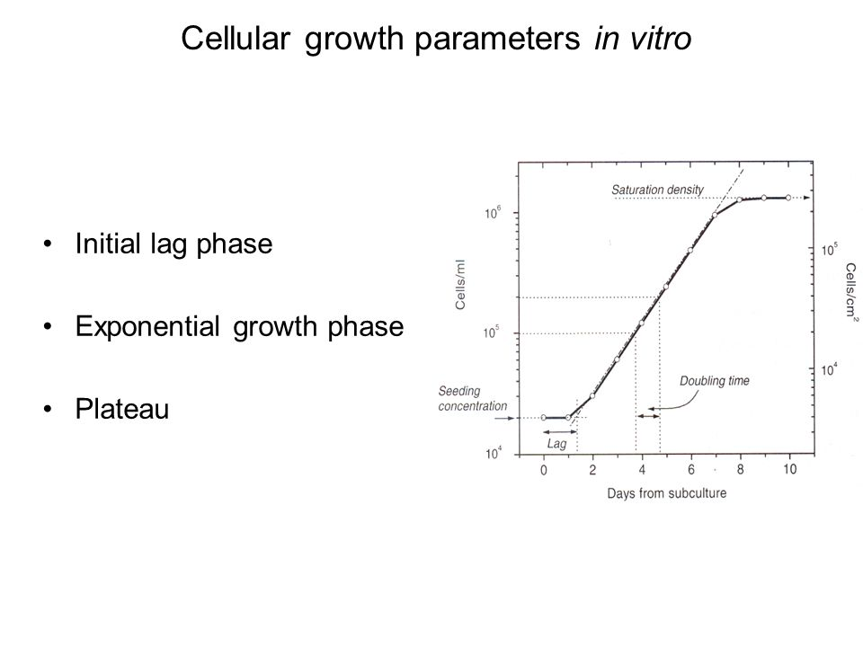 Cellular growth parameters in vitro Initial lag phase Exponential growth phase Plateau