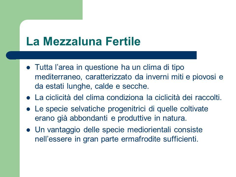 La Mezzaluna Fertile Tutta larea in questione ha un clima di tipo mediterraneo, caratterizzato da inverni miti e piovosi e da estati lunghe, calde e s