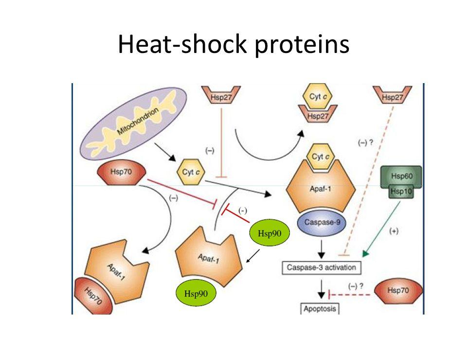 Heat-shock proteins