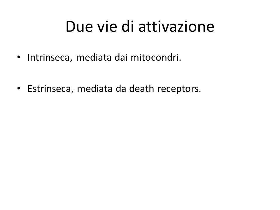 Due vie di attivazione Intrinseca, mediata dai mitocondri. Estrinseca, mediata da death receptors.