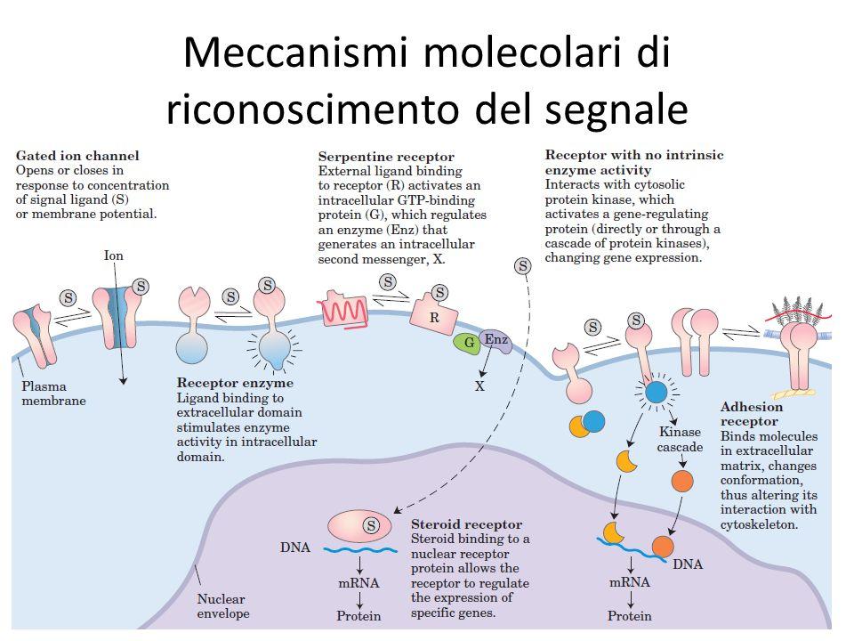 Meccanismi molecolari di riconoscimento del segnale