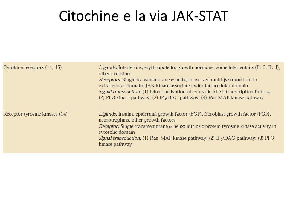 Citochine e la via JAK-STAT