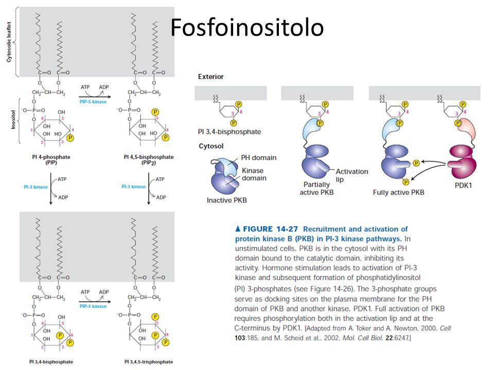Fosfoinositolo