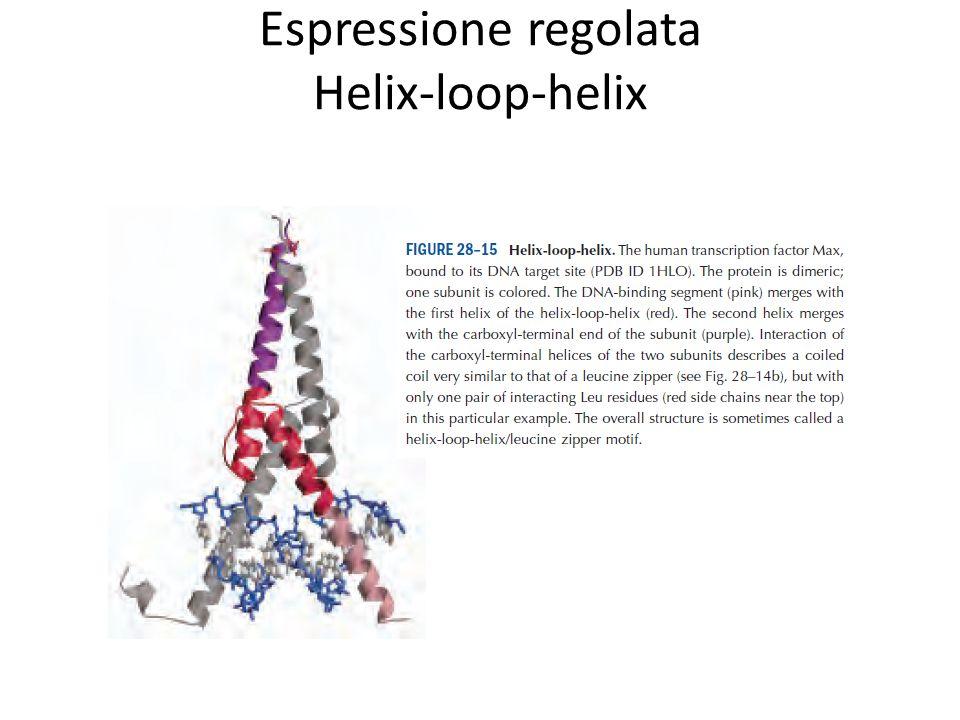 Controllo dellespressione genica Transforming growth factor beta Citochine e la via JAK-STAT La via di RAS Le vie delle MAP kinasi Fosfoinositolo Attivazione/rimozione proteolitica