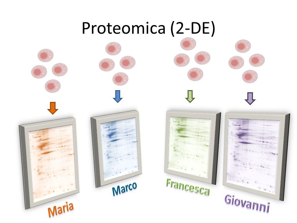 Proteomica (2-DE)