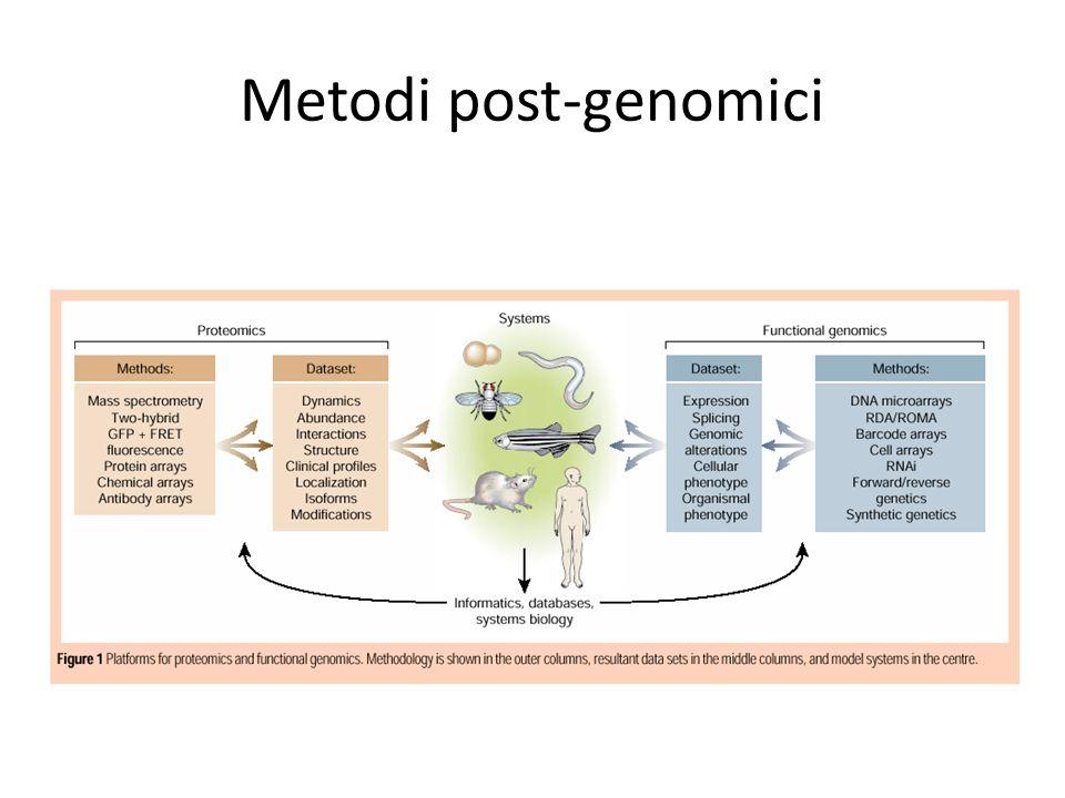Proteomica (gel-free) Protein arrays (e SELDI)