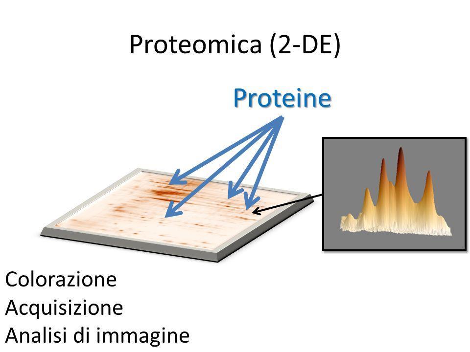 Proteine Colorazione Acquisizione Analisi di immagine