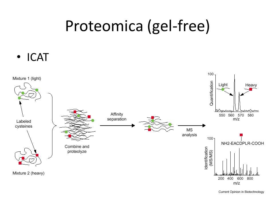 Proteomica (gel-free) ICAT