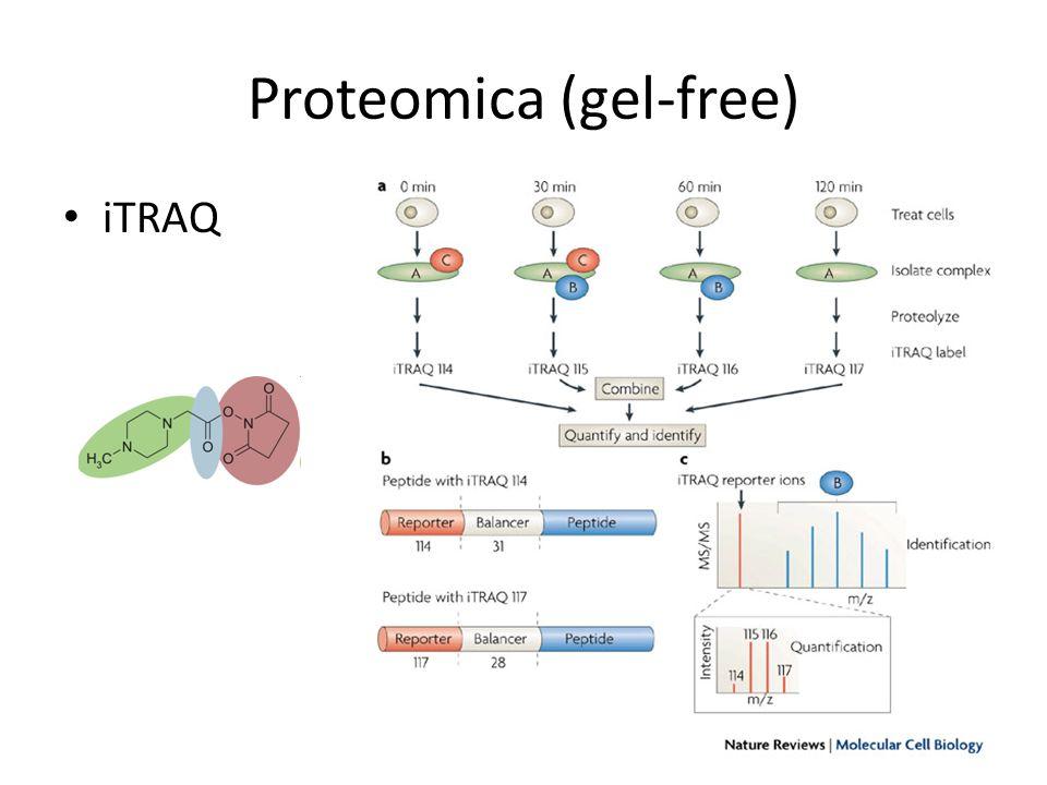 Proteomica (gel-free) iTRAQ