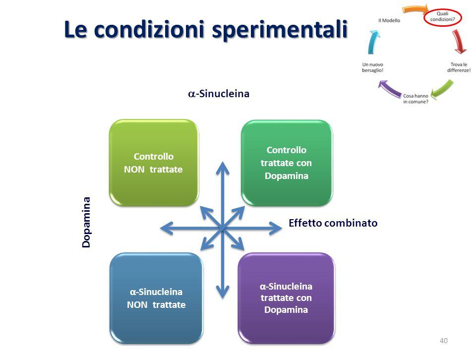 Le condizioni sperimentali Controllo NON trattate Controllo trattate con Dopamina α-Sinucleina NON trattate α-Sinucleina trattate con Dopamina -Sinucl