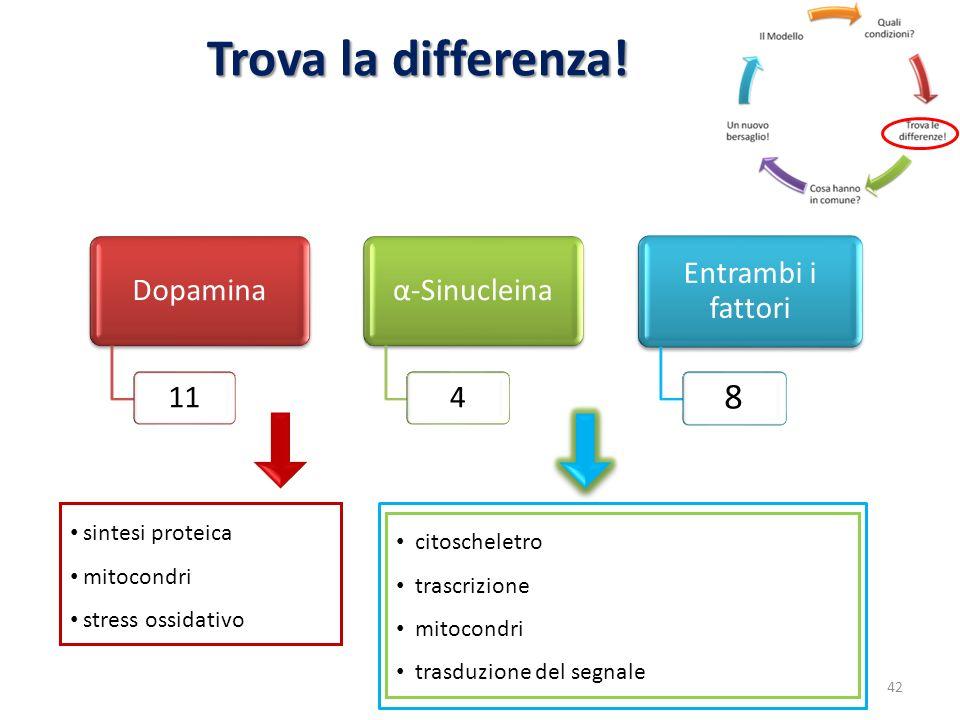 Trova la differenza! Dopamina 11 α-Sinucleina 4 Entrambi i fattori 8 sintesi proteica mitocondri stress ossidativo citoscheletro trascrizione mitocond