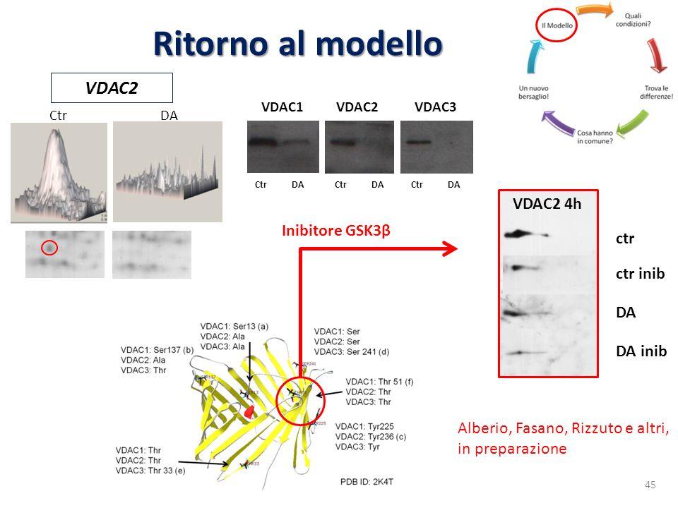 Ritorno al modello VDAC2 4h ctr ctr inib DA inib DA Inibitore GSK3β 45 Alberio, Fasano, Rizzuto e altri, in preparazione VDAC2 CtrDA VDAC1VDAC2VDAC3 C