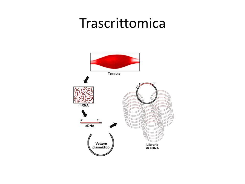 Proteomica (gel-free) Metodi quantitativi (ICAT, iTRAQ, …) Protein arrays