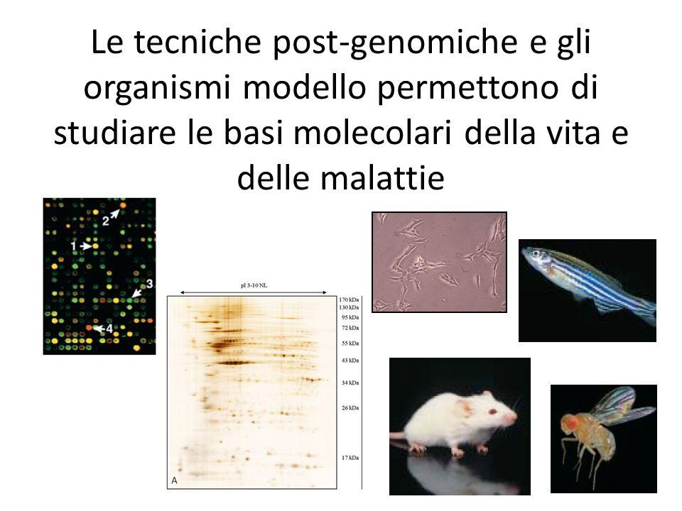 Le tecniche post-genomiche e gli organismi modello permettono di studiare le basi molecolari della vita e delle malattie