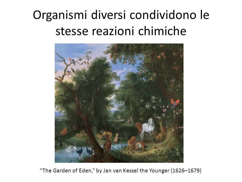 Organismi diversi condividono le stesse reazioni chimiche The Garden of Eden, by Jan van Kessel the Younger (1626–1679)