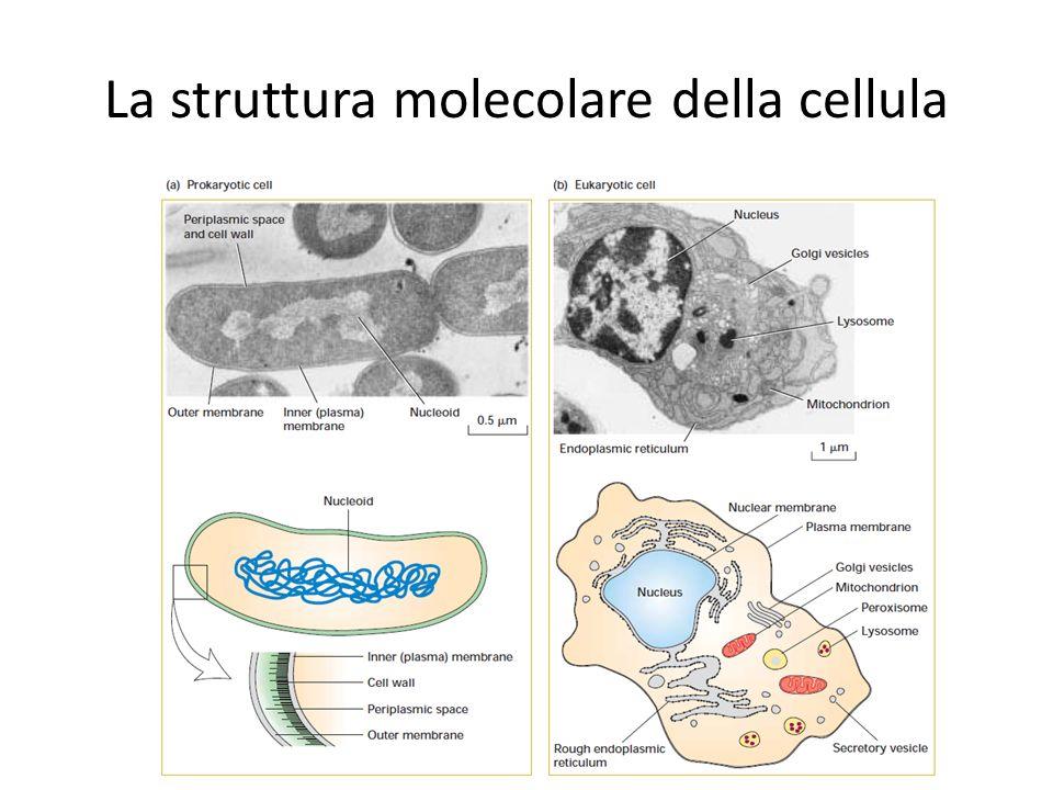 La struttura molecolare della cellula