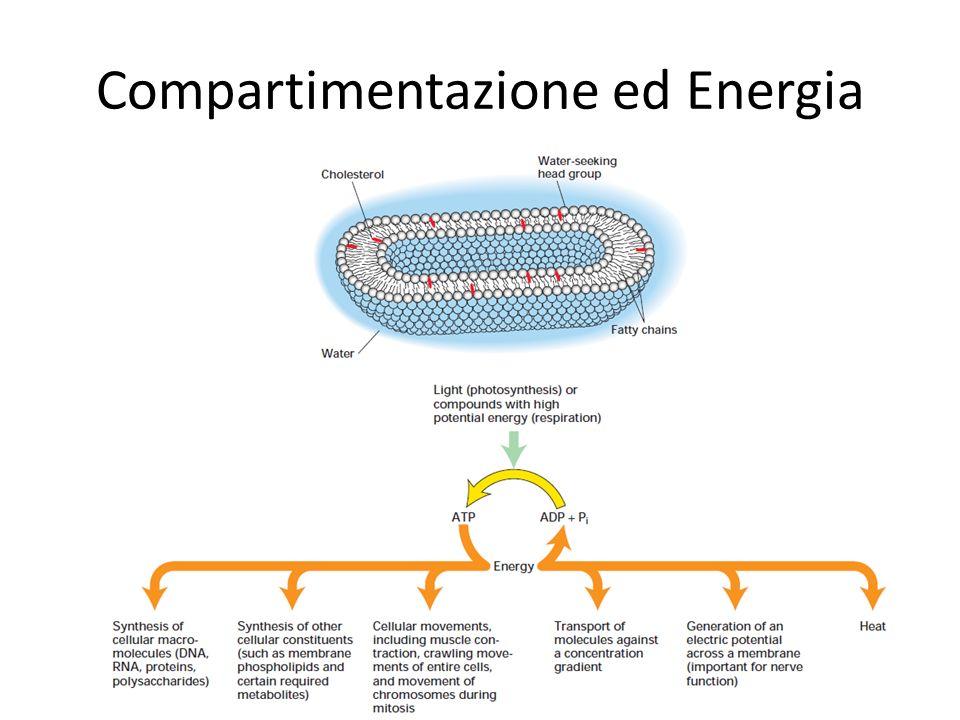 Le cellule cambiano forma e si muovono