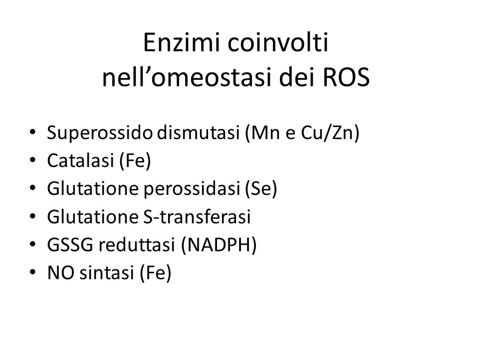 Enzimi coinvolti nellomeostasi dei ROS Superossido dismutasi (Mn e Cu/Zn) Catalasi (Fe) Glutatione perossidasi (Se) Glutatione S-transferasi GSSG reduttasi (NADPH) NO sintasi (Fe)