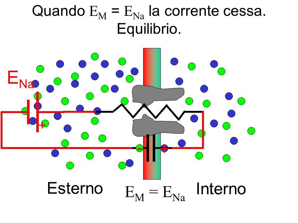 Interno Esterno +1 E M = E Na + E Na - + Quando E M = E Na la corrente cessa. Equilibrio.