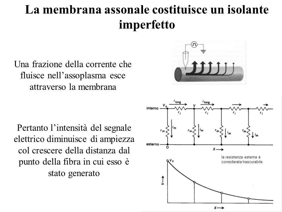 La membrana assonale costituisce un isolante imperfetto Pertanto lintensità del segnale elettrico diminuisce di ampiezza col crescere della distanza d