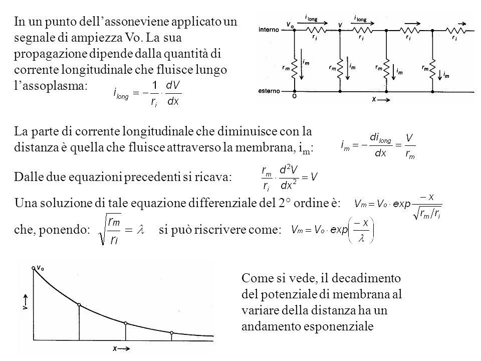 Come si vede, il decadimento del potenziale di membrana al variare della distanza ha un andamento esponenziale In un punto dellassoneviene applicato u